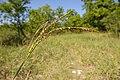 A variety of plants make up a Riparian Buffer. (25112932815).jpg