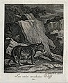 A wolf in a mountainous landscape. Etching by J. E. Ridinger Wellcome V0021057ER.jpg