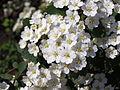 Ab plant 1781.jpg