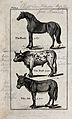 Above, a horse; below, a bull and an ass. Wood-engraving aft Wellcome V0020461ER.jpg