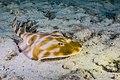 Abrolhos Marine National ParkRobertoCostaPinto16.jpg