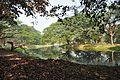 Acharya Jagadish Chandra Bose Indian Botanic Garden - Howrah 2011-01-08 9758.JPG