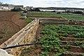 Agriculture in Marsaskala 06.jpg