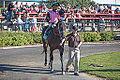 Alberta Breeders' Fall Classic 2014 - Horse Racing (15117900509).jpg