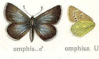 <i>Pamiria omphisa</i> Species of butterfly