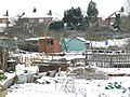 Allotments near the Great Central Way - geograph.org.uk - 1145453.jpg