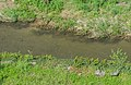 Alrance River in Brousse-le-Chateau 04.jpg