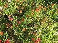 Amin al-Islami Park - Trees and Flowers - Nishapur 044.JPG