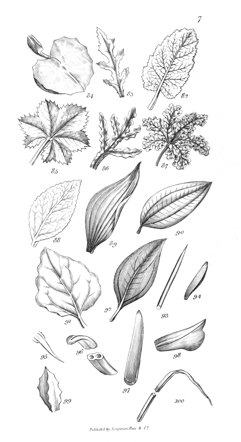 An introduction to physiological and systematical botany - Plate 7.png