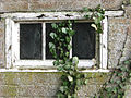 An old window and ivy - geograph.org.uk - 686026.jpg