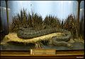 Anaconda (15652940016).jpg