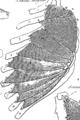 Anatomia Britannica- a system of anatomy Fleuron N001319-26.png