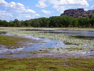 Anbangbang Billabong - Anbangbang Billabong, Kakadu National Park, Australia, at the beginning of the dry season.