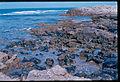 Ancient harbor of Dor now full of stone.jpg