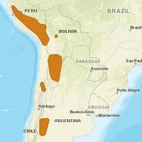 AndeanCat distribution