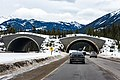 Animal Crossing - Banff National Park & Trans Canada Highway (26205005881).jpg