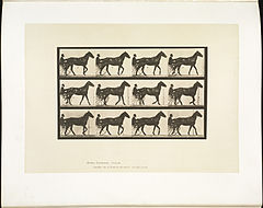 Animal locomotion. Plate 588 (Boston Public Library).jpg