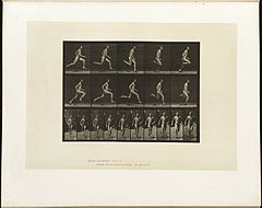Animal locomotion. Plate 60 (Boston Public Library).jpg