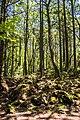 Aokigara forest near wind cave 04.jpg
