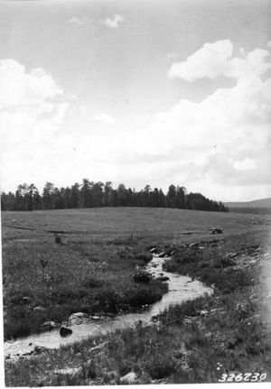 Apache National Forest - Reservation Creek in the Apache National Forest (1936)