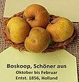Apfel 140 Schoener Aus Boskoop (fcm).jpg
