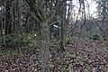 Apfelbaum auf der Burgstelle - panoramio.jpg