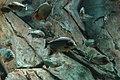 Aquarium (4476738985).jpg