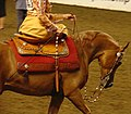 Arabian Side Saddle Horse (2486185781).jpg