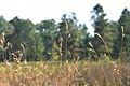 Araignées, insectes et fleurs de la forêt de Moulière (Les Agobis) (28732539910).jpg