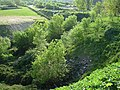 Arboles - panoramio.jpg