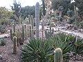 Arizona Cactus Garden 005.JPG