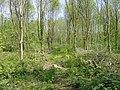 Ash plantation on Johnstown Castle farm, Co. Wexford - geograph.org.uk - 1874049.jpg