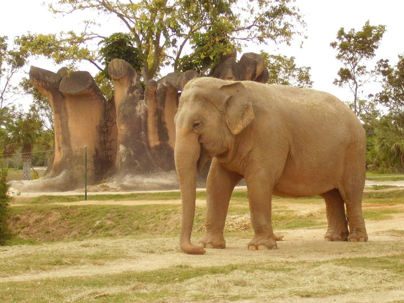 File:Asianelephant3.jpg