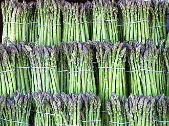 Asparagus - A multitude of cultivated asparagus bundles
