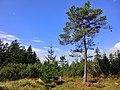 Auf der Königsheide 1 - panoramio.jpg