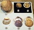 Augsburg Naturmuseum - bivalves.jpg