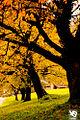 Autumn (5131290165).jpg