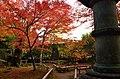 Autumn foliage 2012 (8252562465).jpg