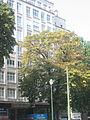 Avenue Louise (2).JPG