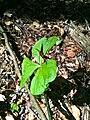 BBHTJerichoTrailWildflower3.jpg