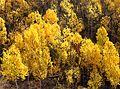 BOULDER MT, UT - 2016-09-30 fall color -22b (31659772705).jpg