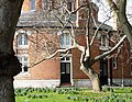Balletic tree, Oldway Mansion, Paignton - geograph.org.uk - 699525.jpg