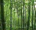 Bamboo 竹林 (5811997592).jpg