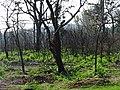 Bandipur Tiger Reserve, Karnataka DSC00741.JPG