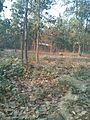 Bangabandhu Sheikh Mujib Safari Park (34).jpg