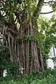 BanyanTree-NationalMuseumofSingapore-20100711-02.jpg