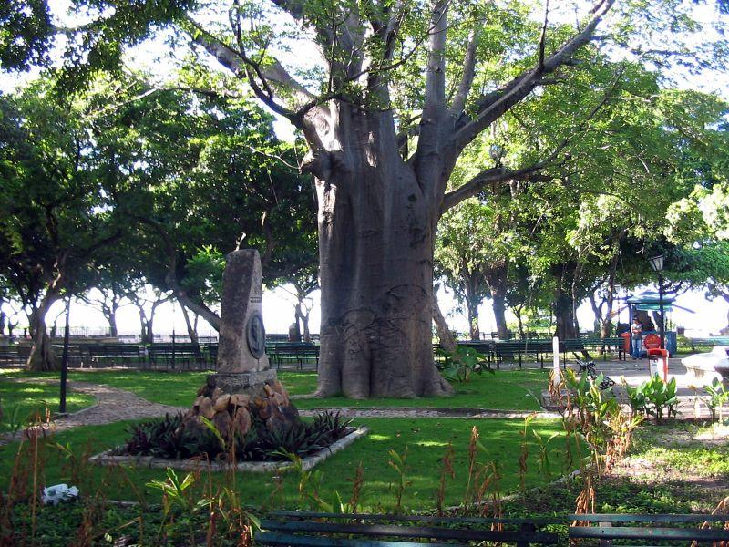 Ficheiro:Baoba no Passeio Publico em Fortaleza.jpg