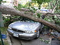 Barcroft 1100 Thomas St Car Damaged by Tree (7536694422).jpg