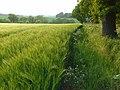 Barley, Bothampstead - geograph.org.uk - 814240.jpg