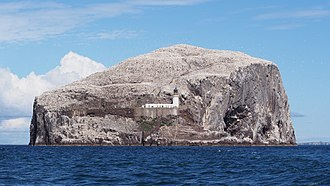 Northern gannet - Bass Rock in the Firth of Forth, Scotland, is the world's largest colony.